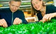 рецепт Как вырастить проростки микрогрин своими руками дома