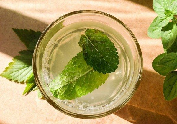 Шампанское из смородиновых листьев в домашних условиях рецепт с фото